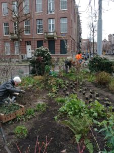 nieuwe planten Johannes Vermeerplein
