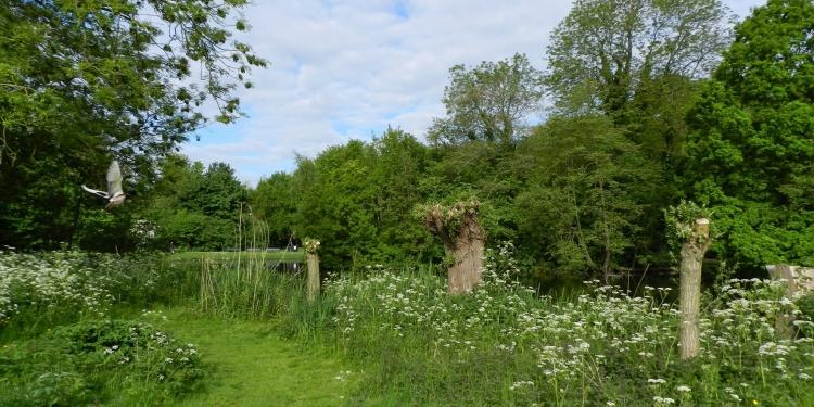 Koeienweide Vondelpark