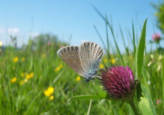 Foto: vlinderstichting