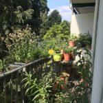 insectvriendelijk balkon
