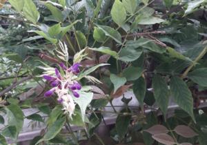Inheemse plant op balkon