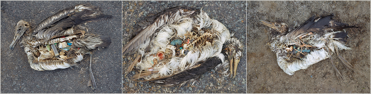 film plastic afval Albatros