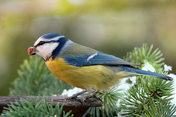 Het bijvoeren van wilde vogels is geen overbodige luxe nu hun leefgebied op het platteland steeds meer afneemt, en de tuinen in de steden steeds meer versteend raken