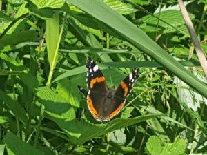 vlindertellingen