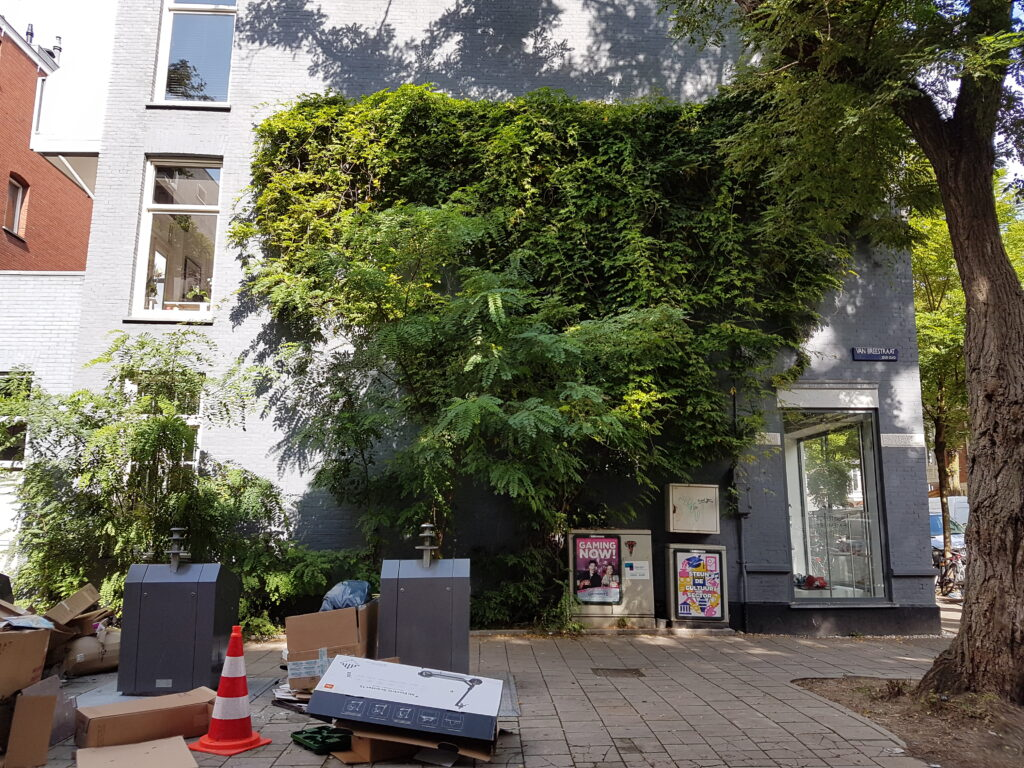 Betere buurt met Buurtgbudget Zuid 2021
