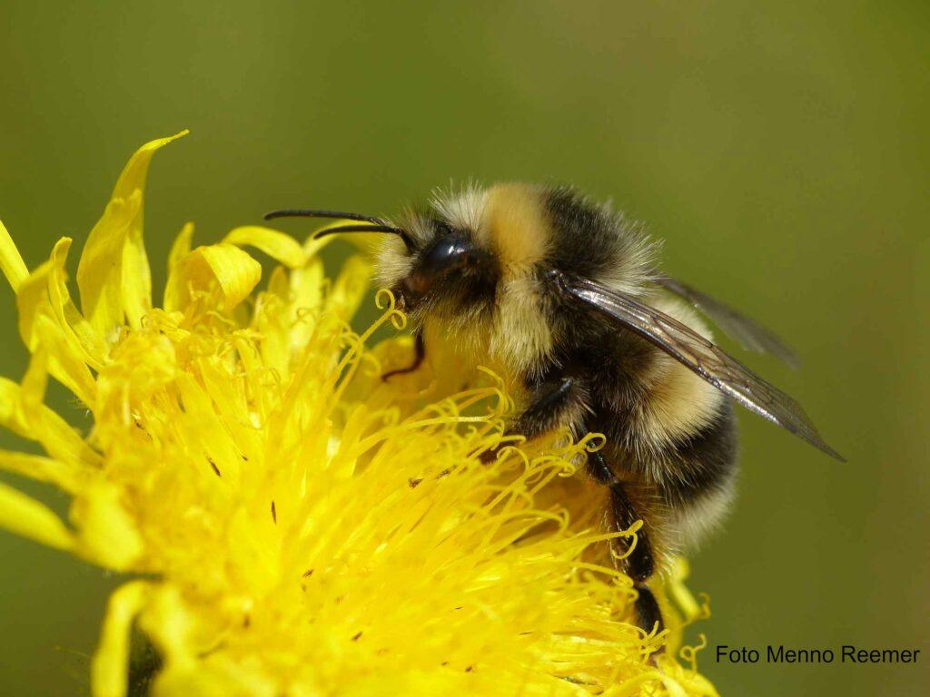 webinar Bijen in elf Amsterdamse parken